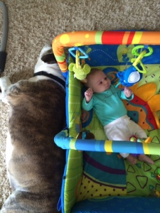 Baby Peanut at 7 weeks. Oblivious to Mack's love for her.....and her toys.